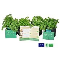 ODYSEED - Kit Prêt à Pousser Herbes aromatiques - 4 Variétés de graines ( Basilic Grand Vert, Persil, Coriandre, Menthe) & 4 SmartsPots 4L + substrat de qualité - Cultivez vos propres herbes - 100% BIO - Origine Européenne.