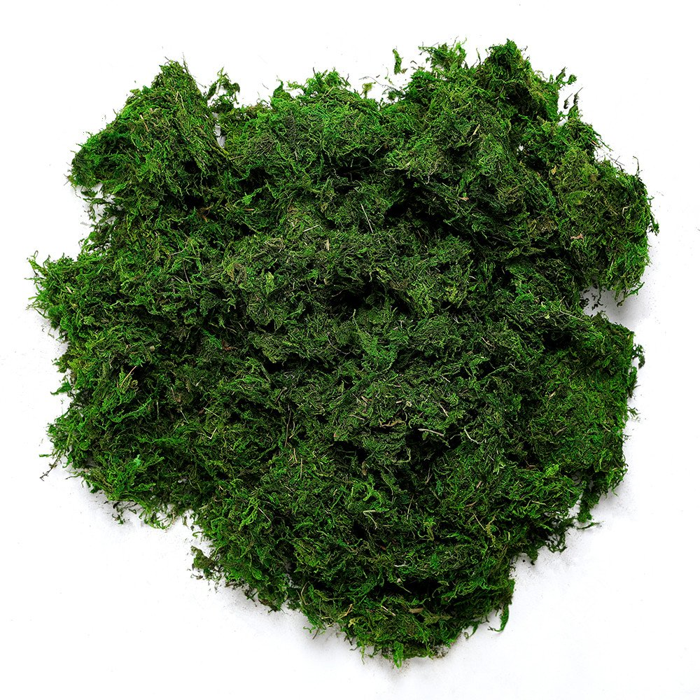 Byher 92926 Preserved Forest Moss, Fresh Green, 8oz (200 cubic inch)