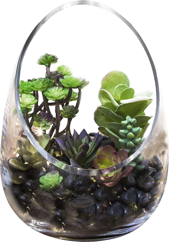 Home Essentials & Beyond 7489 Home Essentials Habitat 8.5 Slant Back Clear Terrarium
