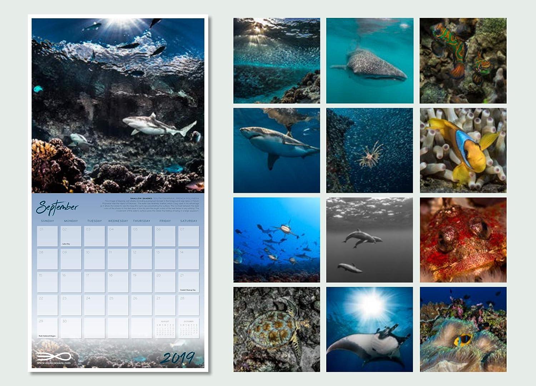 Our World Underwater World 2020 dise/ño de naturaleza marina Calendario de pared