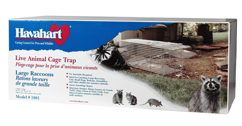 amazon com havahart 1081 live animal professional style one door
