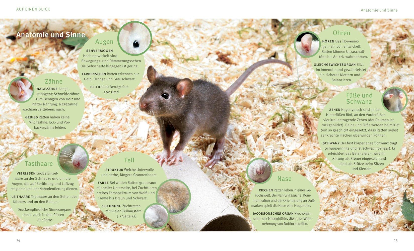 Ratten: 9783833855078: Amazon.com: Books