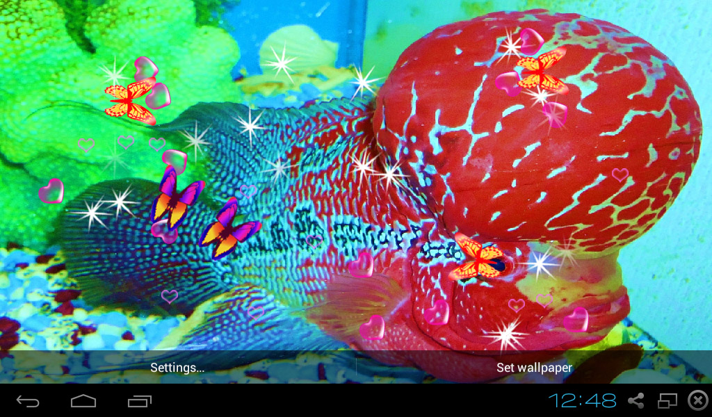 3d flowerhorn cichlid live wallpaper appstore for Flower horn fish price