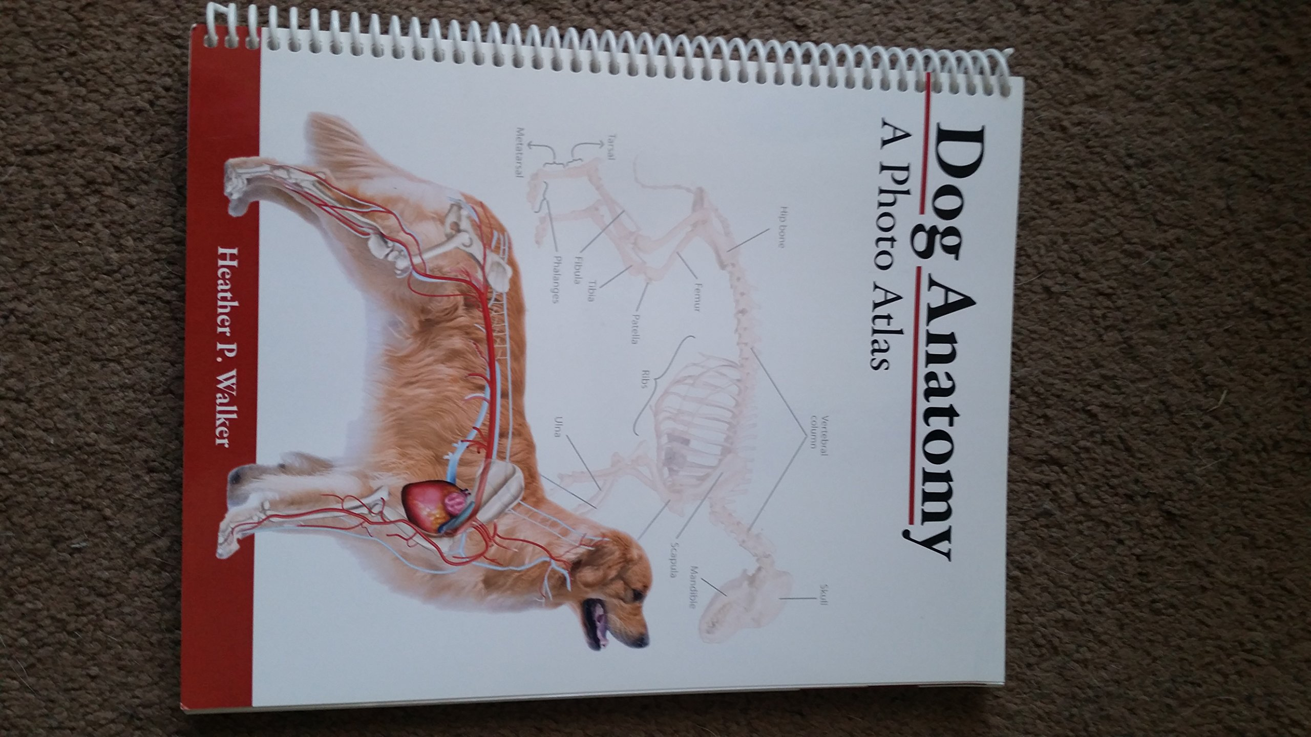 Dog Anatomy: A Photo Atlas: Heather P. Walker: 9781599842912: Amazon ...