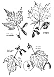 Native Harvests: American Indian Wild Foods and