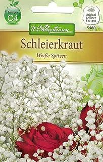 Kiepenkerl Saatgut Schleierkraut Weiße Spitzen
