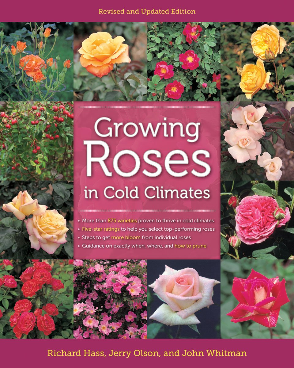 Growing Roses In Cold Climates Revised And Updated Edition Hass