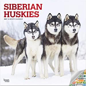 Siberian Huskies Calendar 2021 Bundle - Deluxe 2021 Siberian Huskies Wall Calendar with Over 100 Calendar Stickers (Siberian Huskies Gifts, Office Supplies)