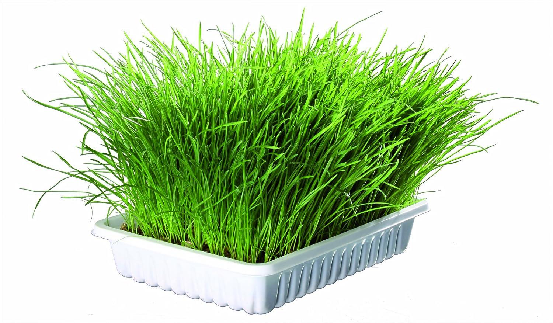 Trixie Bandeja Bio hierba para gatos, aprox.100 g 4011905042329