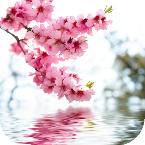 Beautiful flowers free live wallpaper - Flower wallpaper dp ...