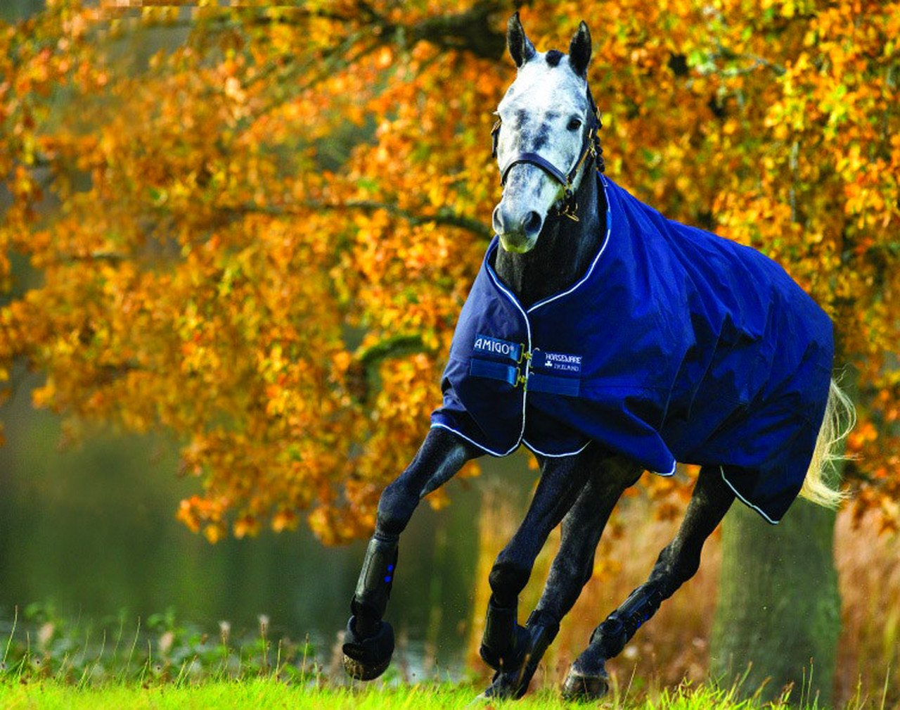 Horseware Decke Amigo Bravo 12 Lite 0g