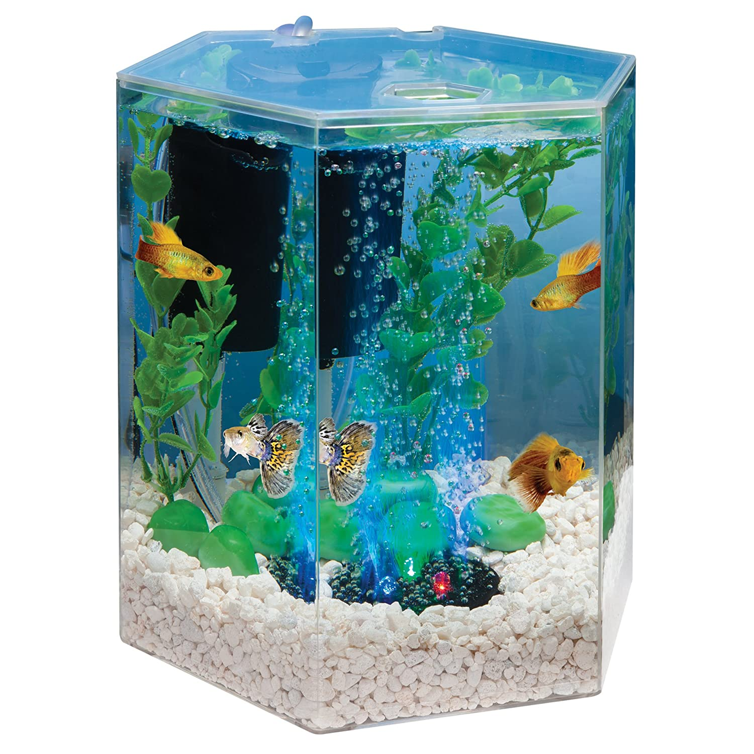 small screenshot 1 office fish. amazoncom tetra 29040 hexagon aquarium kit with led bubbler 1gallon starter kits pet supplies small screenshot 1 office fish i
