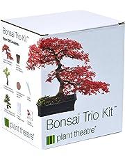 3 Distinctive Bonsai Trees to Grow