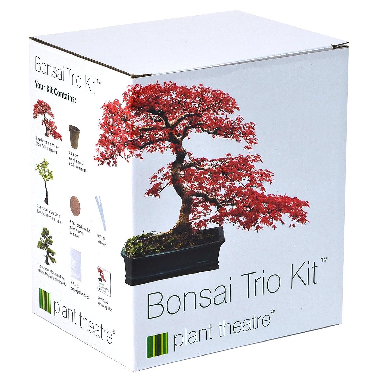Plant Theatre Bonsai Trio Kit 3 Distinctive Bonsai Trees To Grow