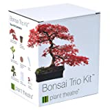 Three Distinctive Bonsai Tree Kit