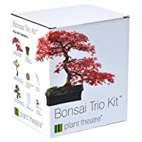 Plant Theatre Bonsai Trio Kit - 3 Distinctive Bonsai Trees to Grow.