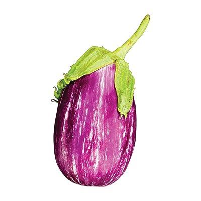 Burpee Shooting Stars Eggplant Seeds 30 seeds : Garden & Outdoor