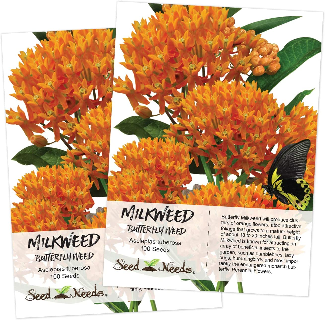 Common Milkweed  25 SEEDS Butterfly Host Plant  Asclepias syriaca