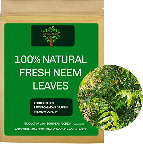 Fresh Neem Leaves, Organic Neem Variety, Seal Vacuum Bag, Qty 40 Leaves