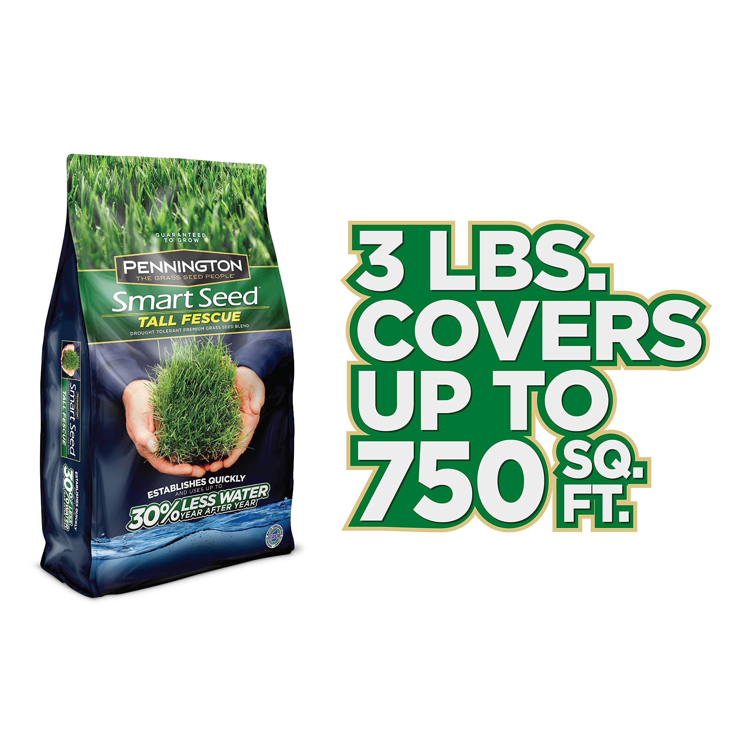 Pennington 100526675 Smart Seed Tall Fescue Grass Seed, 3 LB by Pennington (Image #6)