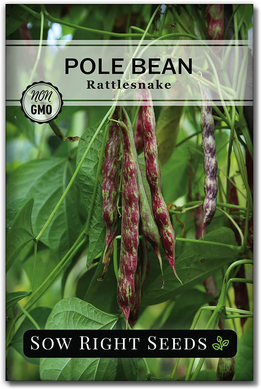 Sow Right Seeds - Rattlesnake Pole Bean Seed for Planting - Non-GMO Heirloom Packet with Instructions to Plant a Home Vegetable Garden