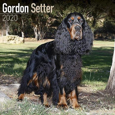 Gordon Setter Calendar 2020 - Dog Breed Calendar - Wall Calendar 2019-2020