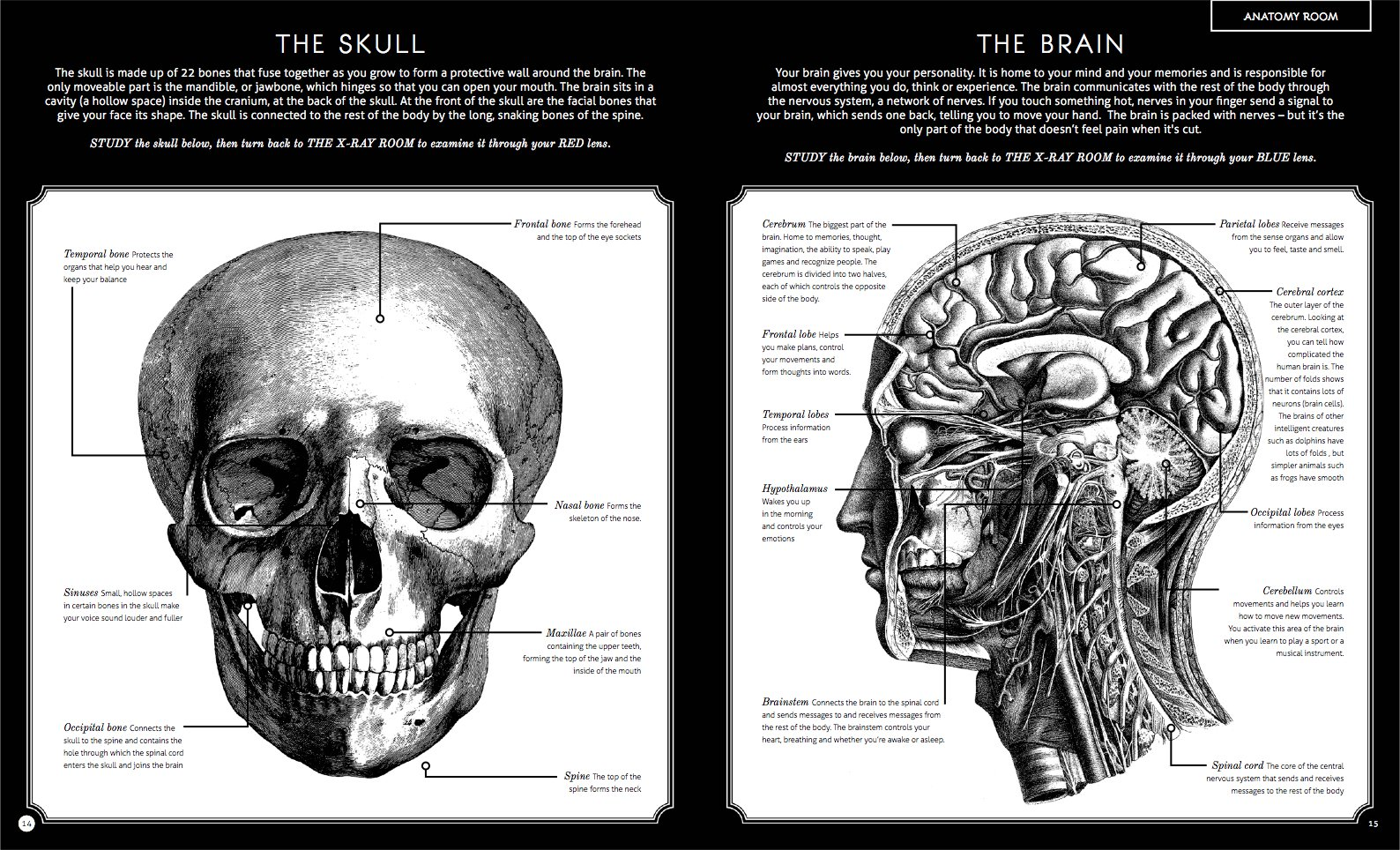 Illumanatomy: See inside the human body with your magic viewing lens ...
