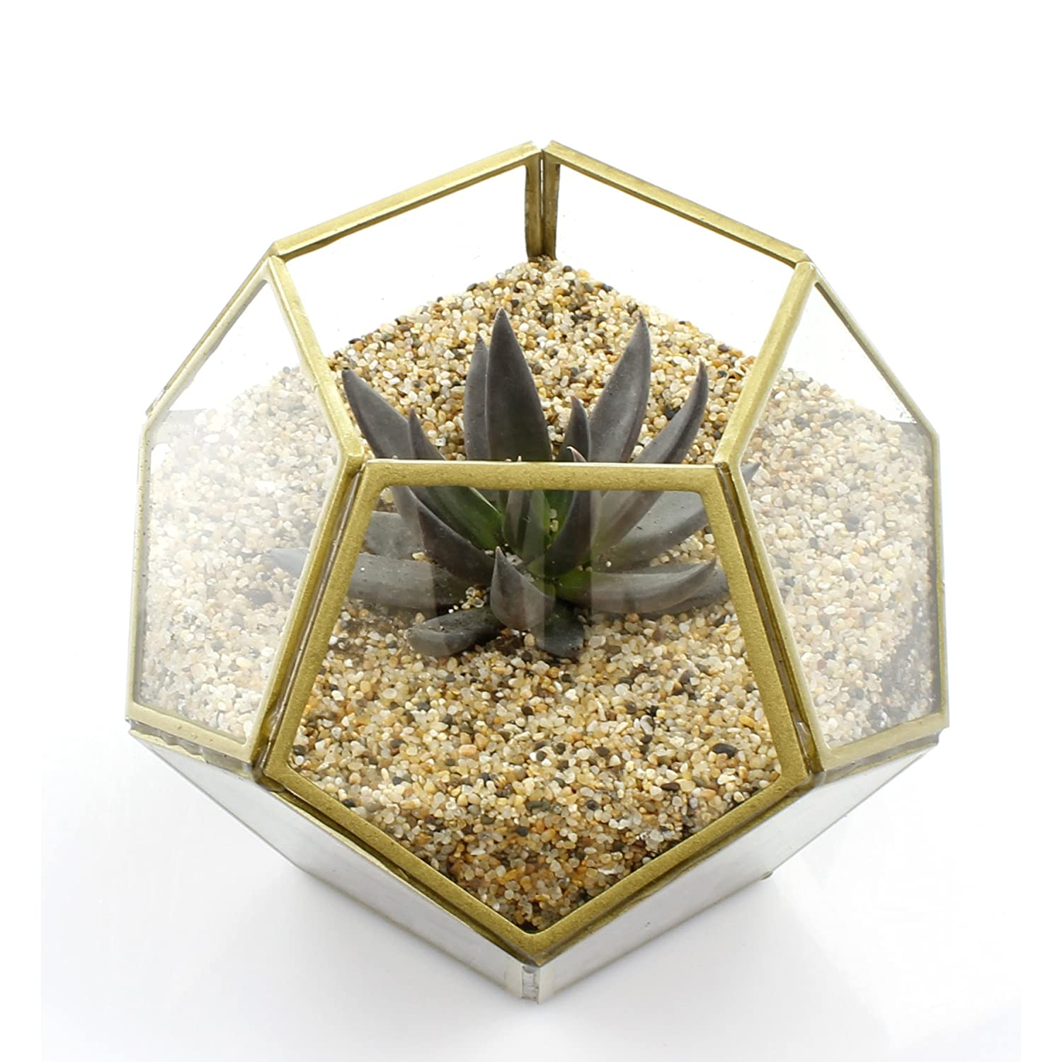 NW Wholesaler - Thick Watertight Glass Dodecahedron Geometric Terrarium with Gold Trim