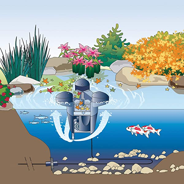 Pond-Skimmer