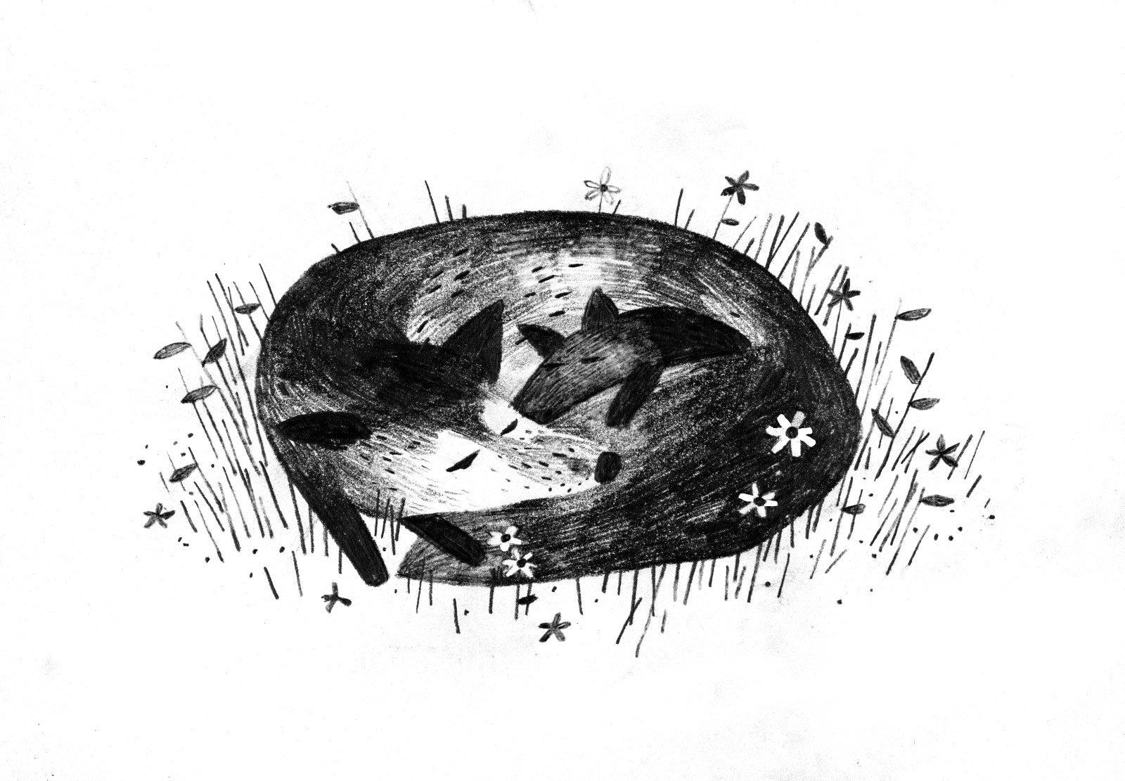 Znalezione obrazy dla zapytania fox sara pennypacker gif
