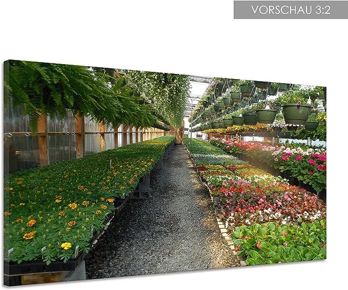 Flores Invernadero Jardín Invernadero Plantas Lienzo Póster Impresión de cc1717, 80x60: Amazon.es: Hogar