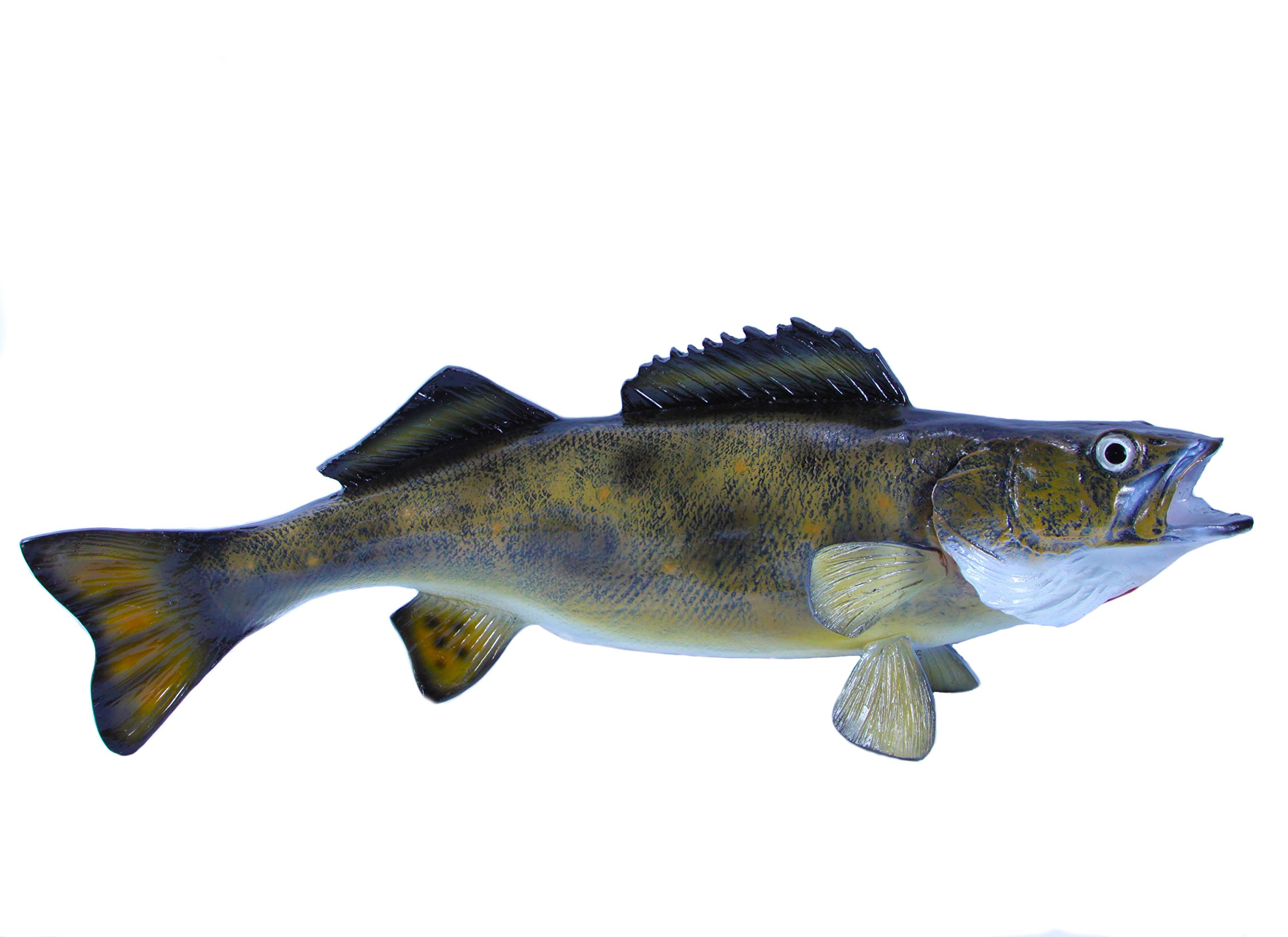 Giant Taxidermy 23'' Fiberglass Walleye Fish Mount by Land and Sea