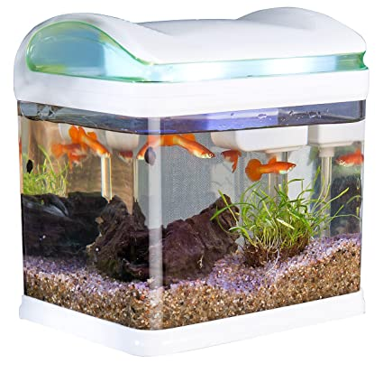 Relativ Sweetypet Aquarium: Transport-Fischbecken mit Filter, LED KW41
