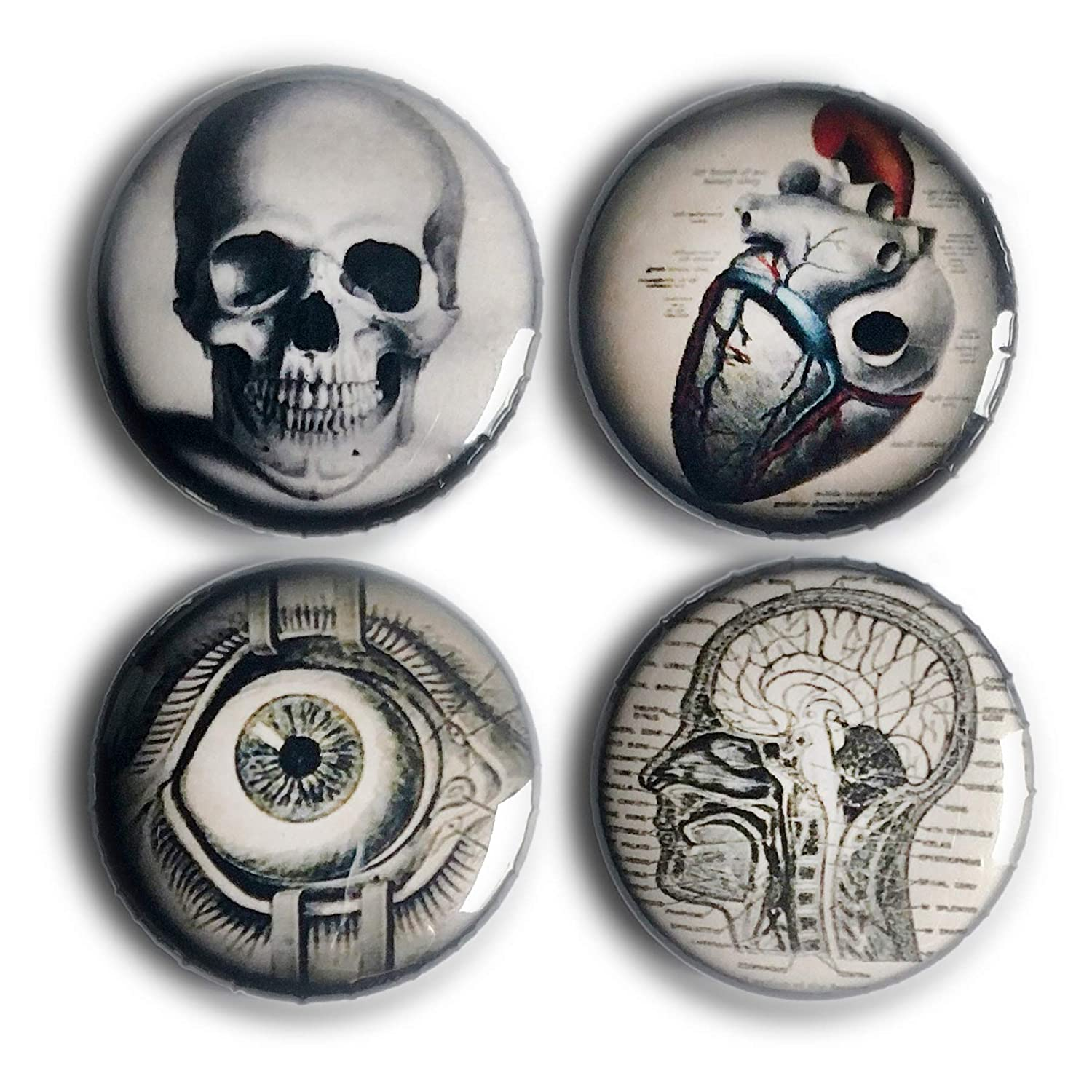 "Gross Anatomy 1"" Magnet Set"