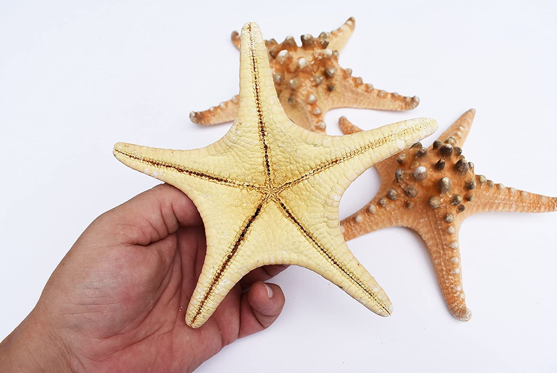 Bafrsc Personalized Nautical Marine Life Sea Star Seahorse Turtle Octopus Coastal Beach Womens Shell Shape Purse Travel Storage Bag Organizer Bag Gift 2Pcs