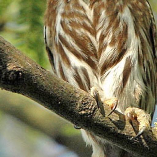Owl Wallpaper Hd Wallpapers Of Owls Amazones Appstore