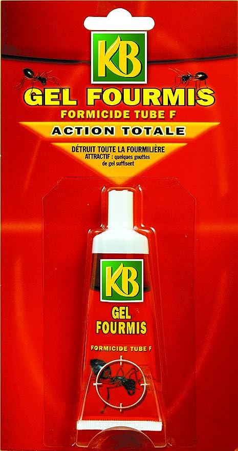 Traitement Anti Fourmi Exterieur