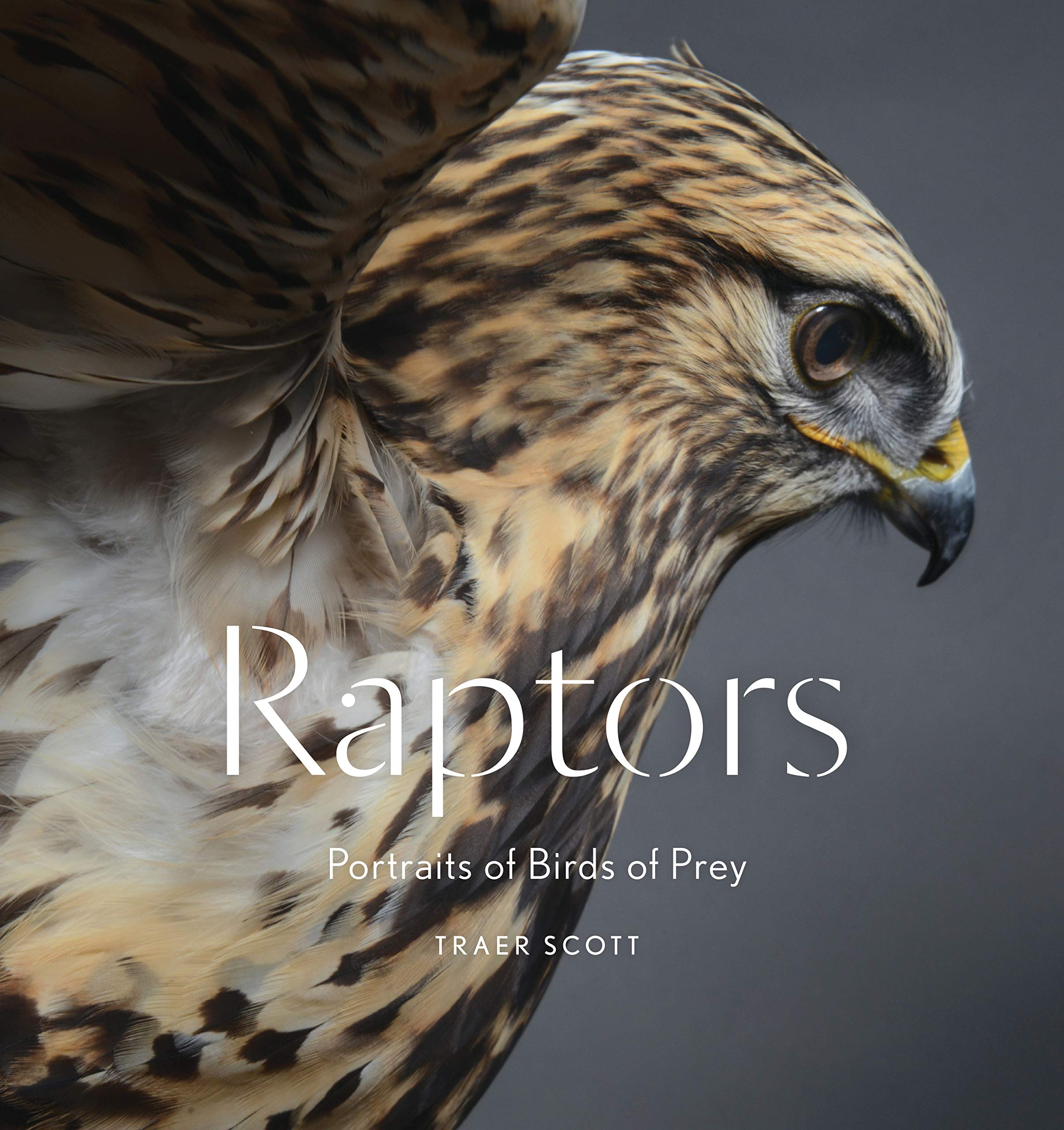 Eagles Birds of Prey: Hawks Falcons and Vultures of North America