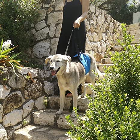 Gemtune elevación arnés, ayuda de perros con débil patas Stand Up ...