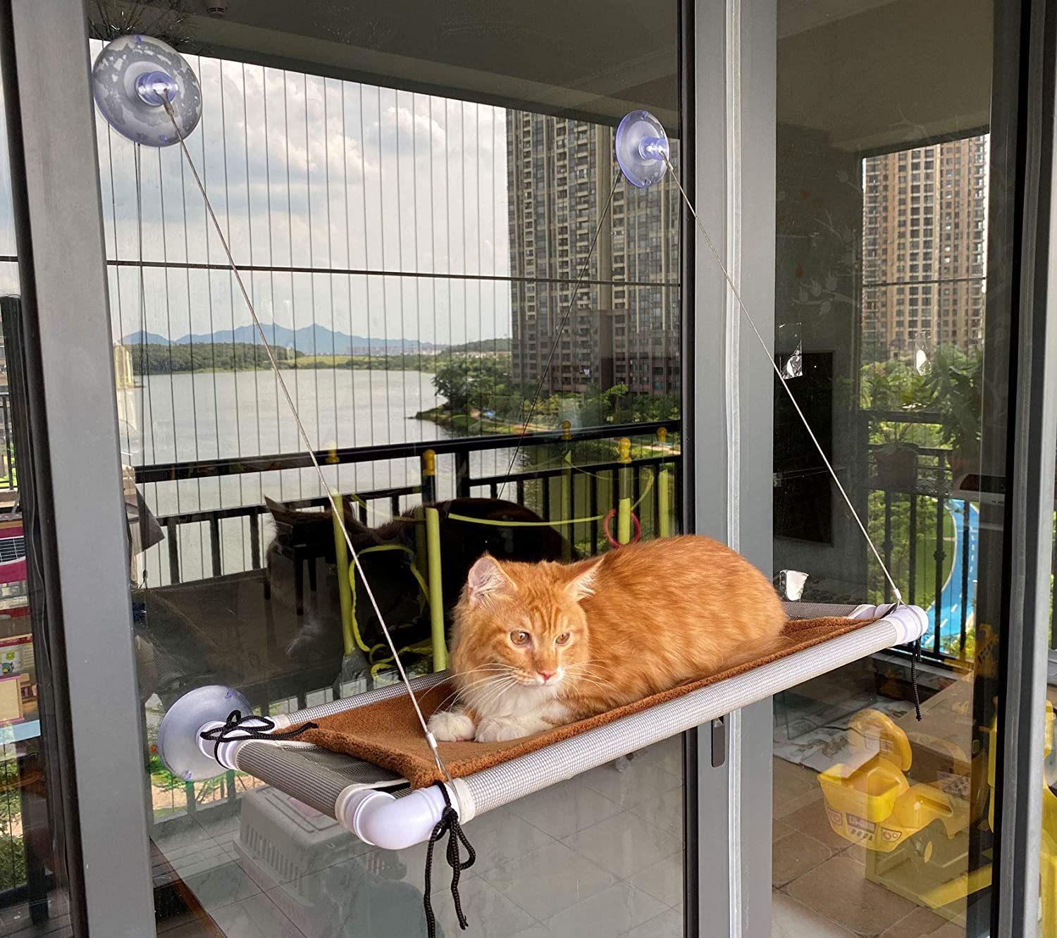 Cat Bed, Hammock Window Seat and Window Perch for Large cat: Kitchen & Dining