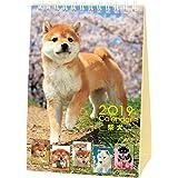 アクティブコーポレーション 2019年 犬 柴犬 カレンダー 卓上 森田米雄 まるごと柴犬 ACL-543 (2019年 1月始まり)