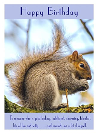 Squirrel Birthday Card Amazon Office Products