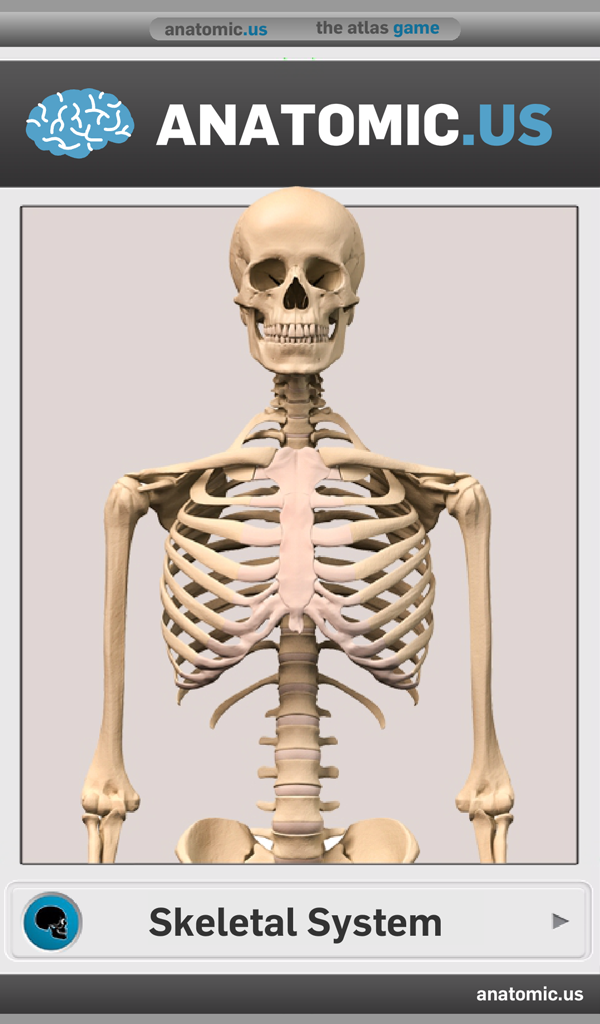 Amazon Skeletal Anatomy Game Lite Appstore For Android