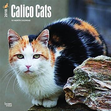 Calendario 2018 gato tachetes- Calico - tricolor - gatitos + incluye un - Agenda de bolsillo 2018: Amazon.es: Oficina y papelería