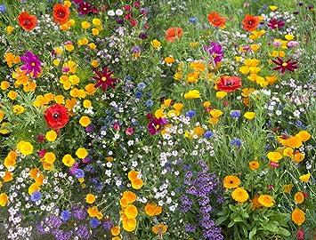 Bildergebnis für wiesenblumen bilder kostenlos