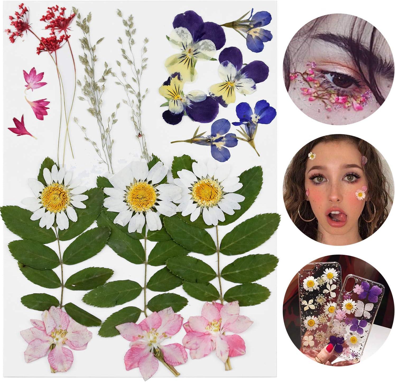 WEKON 24 St/ück Echte Blumen Blumendekor Basteln Gepresste Blumen Getrocknete Bl/ätter Gemischte Farbe f/ür DIY-Kunst Rosa Lila Handwerk Karten Herstellung