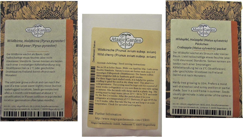 set regalo di semi con 3 ricche variet/à di frutta selvatica Alberi da frutto selvatici