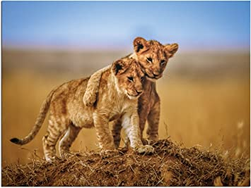 JP London Solvent Free Print PAPL1X539461 Brothers for Life Family Lion Cub Love Ready to Frame Poster Wall Art 40 h by 30 w