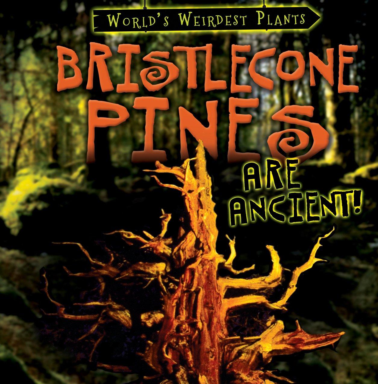 Bristlecone Pines Are Ancient! (World's Weirdest Plants)