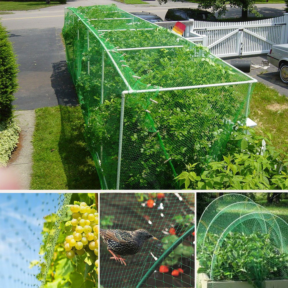 TedGem Bird Netting, 4 10m - 32.8 x 13.2 feet Green Garden Plant Net Tree Netting, Rodent Bird Protection Net, Bird X Netting to Protect Garden Plants, Fruit from Birds Damage